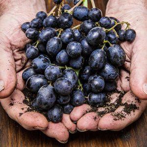 organic New Zealand wines